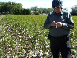 Mike-in-field-of-cotton